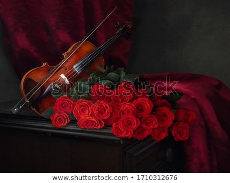 beautiful roses and violin stock photo © brunoweltmann