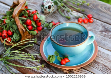 dog rose tea Stock photo © stevanovicigor