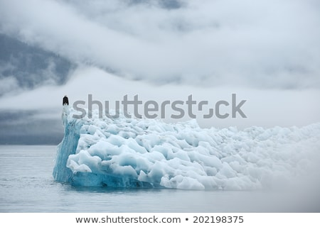 Deep blue glacier ice with a bald eagle. Stock photo © jaymudaliar