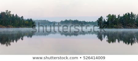 Green tree with reflection on lake water surface Stock photo © pzaxe