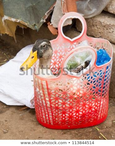 Ente gekauft Verbrauch Markt Hände Essen Stock foto © michaklootwijk