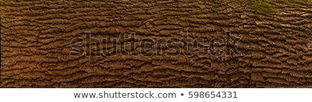 Arbre écorce texture isolé brun Photo stock © stocker
