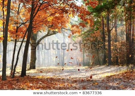 падение дуб лист осень передний план расплывчатый Сток-фото © maros_b
