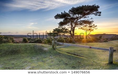 Zonsondergang nieuwe bos zonlicht park Stockfoto © flotsom