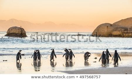 strand · stad · reizen · South · Africa · mooie · panoramisch - stockfoto © dirkr