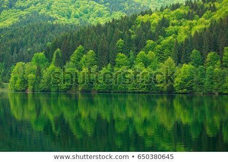 Green forest and morning sunlight background stock photo © shihina