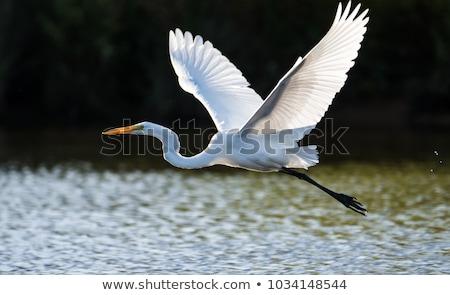 Muhteşem su sığ göl Stok fotoğraf © rhamm