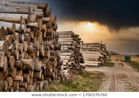 Wood log wall Stock photo © gladiolus