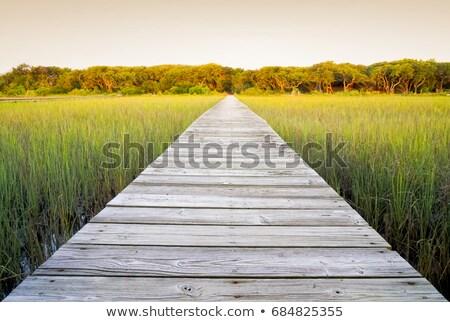 Path through the reeds Stock photo © olandsfokus