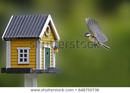 madarak · vándorlás · sziluett · sereg · gyönyörű · rózsaszín - stock fotó © alexaldo