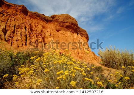 flowers on the Cliffs at Praia da Falesia Stock photo © compuinfoto