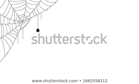 halloween · siyah · beyaz · hatları · siyah - stok fotoğraf © suegresham