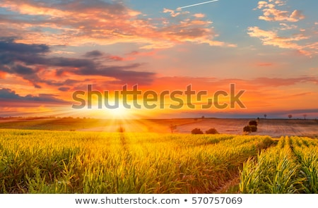 sunset at the farm color image stock photo © backyard-photography