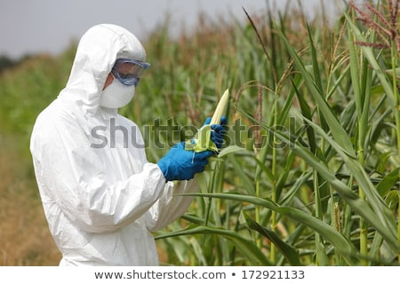 Genetically Modified Crops Stock photo © Lightsource