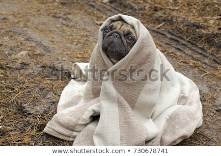 Cold weather coming. Stock photo © lithian