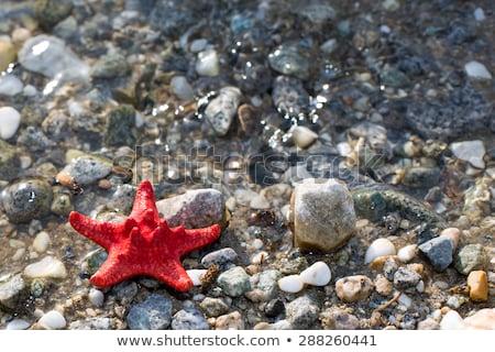 Starfish on stone seacoast Stock photo © Paha_L
