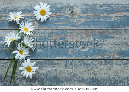 güzel · sarı · beyaz · papatya · çiçek - stok fotoğraf © jonnysek