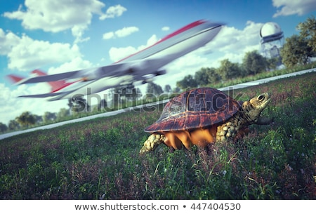 Who's faster. Airplane and running turtle. Travel technology concept Stock photo © denisgo