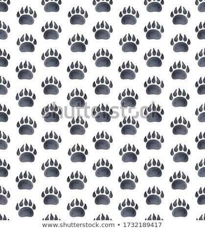 волка следов лесу иллюстрация улыбка природы Сток-фото © adrenalina