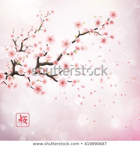 Stock fotó: Cseresznyevirág · valósághű · szalag · eps · 10 · sakura