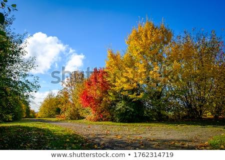 дерево · солнце · цвета · небе · природы · пейзаж - Сток-фото © imaster