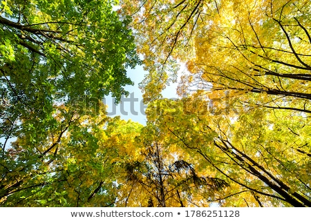 Low Angle View Of Autumn Woods Stock photo © monkey_business