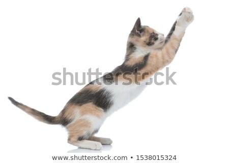 orange cat reaching up to something Stock photo © feedough