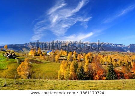 Parque Rumania alpino paisaje soleado invierno Foto stock © photosebia