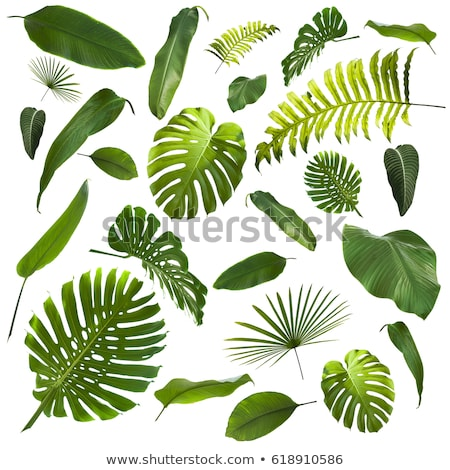 abstract green leafs set Stock photo © pathakdesigner