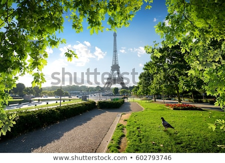 trees in park of paris stock photo © givaga