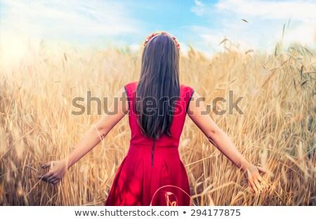 麦畑 成熟した 農業 穀物 収穫 ストックフォト © romvo
