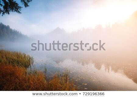 nebuloso · manhã · lago · pequeno · floresta · natureza - foto stock © juhku