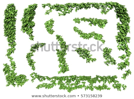 Groene klimop bladeren muur gebouw textuur Stockfoto © boggy