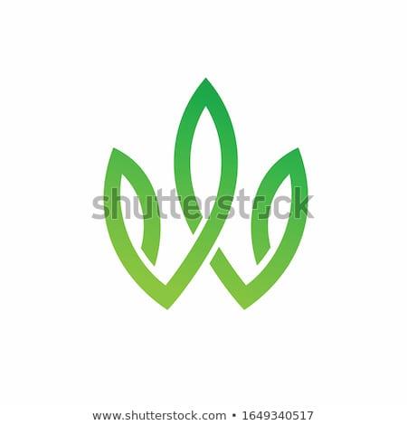 Eco zielone list w logo podpisania Zdjęcia stock © blaskorizov