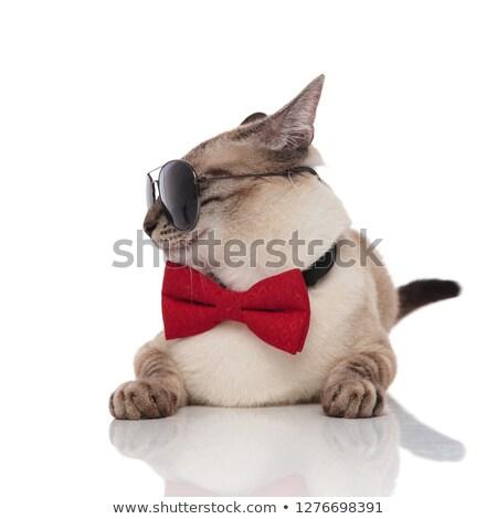 Gentleman · Katze · tragen · Sonnenbrillen · Seite · weiß - stock foto © feedough