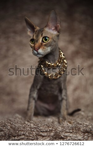curious grey tabby cat wearing necklace looks to side  Stock photo © feedough