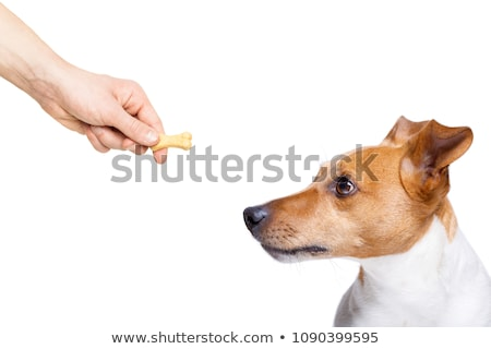 Dog Hand Treat Biscuit Stock photo © lenm
