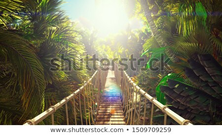 wooden bridge in bamboo forest stock photo © colematt