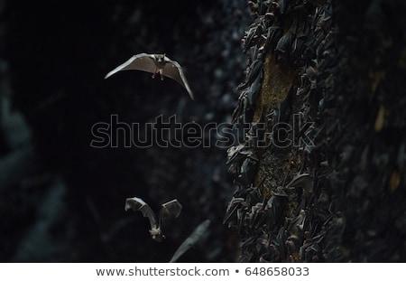 Kolonie grot goa bali Indonesië steen Stockfoto © boggy