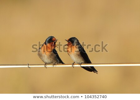 Birds on a wire #2 Stock photo © robStock