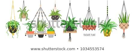 растений · интерьер · флора · природного · декоративный - Сток-фото © jossdiim