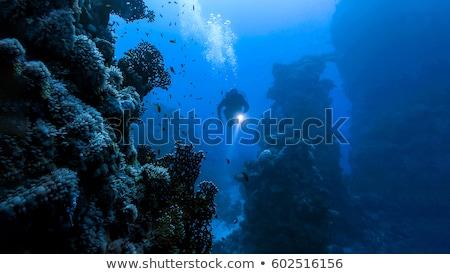 Diver подводного только плаванию рыбы кадр Сток-фото © nomadsoul1
