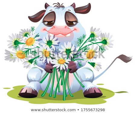 Calf goby hold bouquet of daisies. White bull symbol of 2021 on Chinese calendar Stock photo © orensila