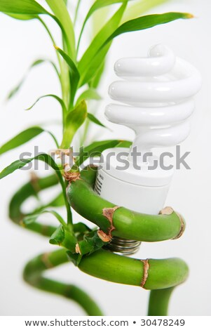 緑 · タングステン · 電球 · 白 · 色 · 電気 - ストックフォト © pkdinkar
