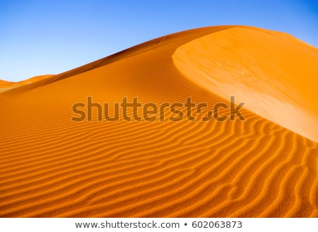 sand and dune in the desert Stock photo © njaj