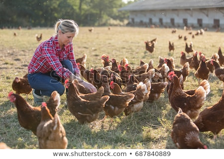 chicken farmer stock photo © filmstroem