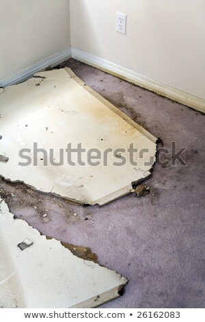 water leaking damaged plasterboard and carpet stock photo © devon
