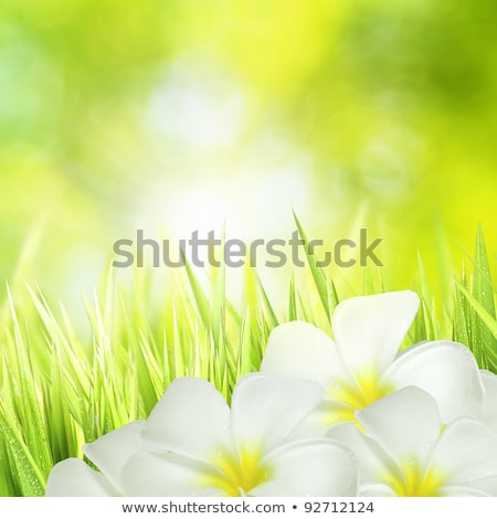 Stock photo: Green grass with sunny bokeh. Square composition.