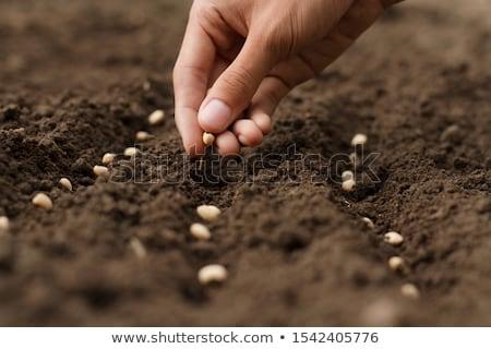 kéz · vetés · magok · föld · kezek · étel - stock fotó © stocksnapper
