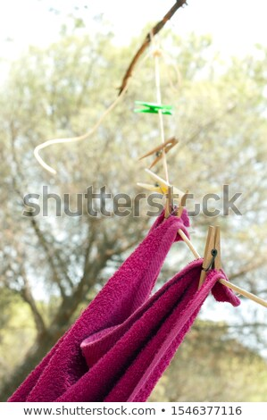Clothes dryer on tree branch Stock photo © deyangeorgiev